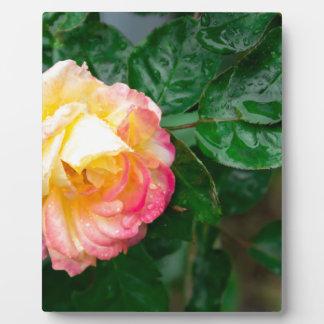 Fading autumn rose plaque