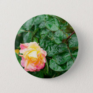 Fading autumn rose with droplets 2 inch round button