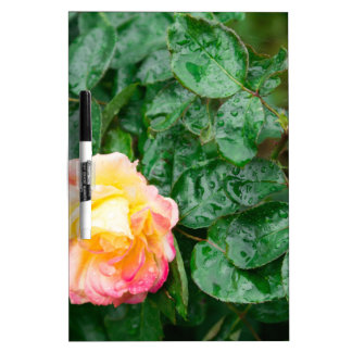 Fading autumn rose with droplets Dry-Erase whiteboards