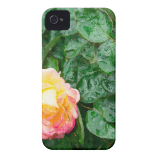 Fading autumn rose with droplets iPhone 4 cover