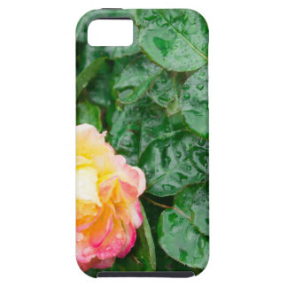 Fading autumn rose with droplets iPhone 5 cases