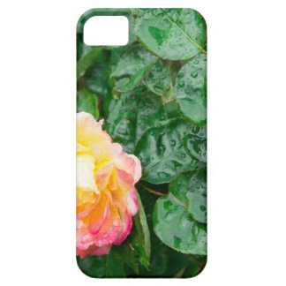 Fading autumn rose with droplets iPhone 5 covers