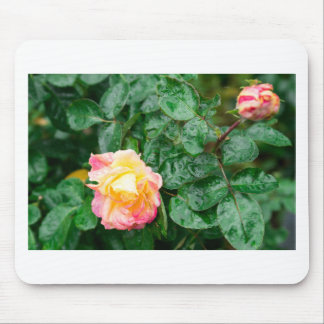 Fading autumn rose with droplets mouse pad