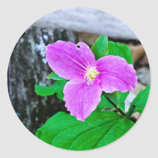 Fading Large-flowered Trillium Classic Round Sticker