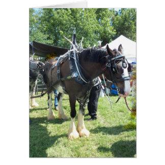 Fair Horse Card