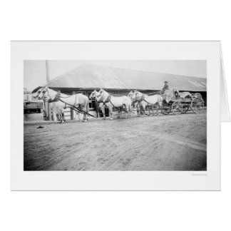 Fairbanks Horse Team 1915 Card