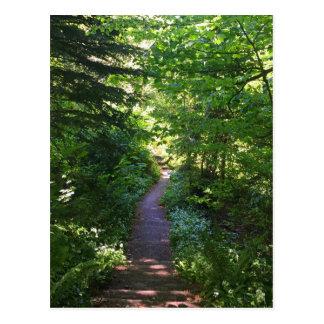 Fairy Pathway Postcard