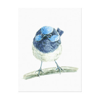 Fairy wren canvas print