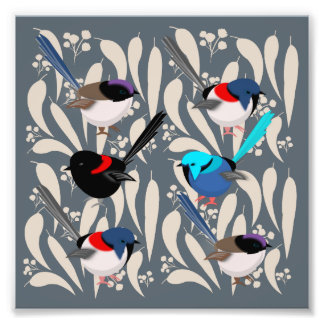 Fairy Wrens Photo Print