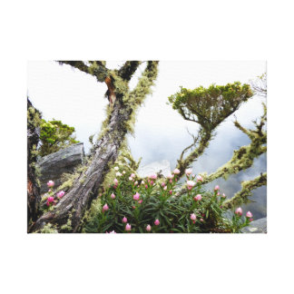 Fairyland in the Clouds Canvas Print