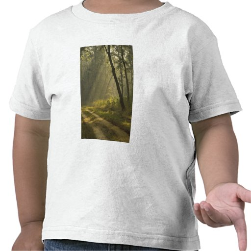 Faisceaux lumineux de matin par des arbres dans la t-shirt