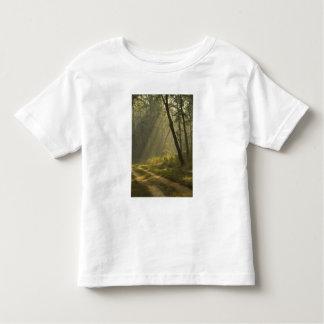Faisceaux lumineux de matin par des arbres dans la tee-shirt