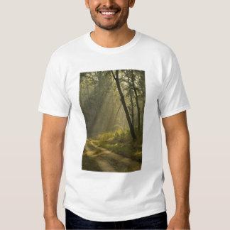 Faisceaux lumineux de matin par des arbres dans la tshirts