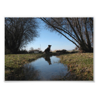Faithful Farm Dog Photo Print