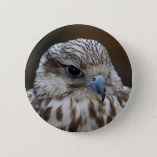 Falco cherrug Portrait 2 Inch Round Button
