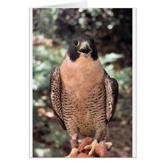 falcon card