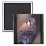 falcon magnets