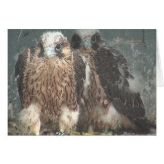 Falcon note card