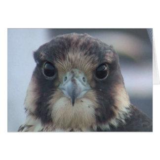 Falcon notecard