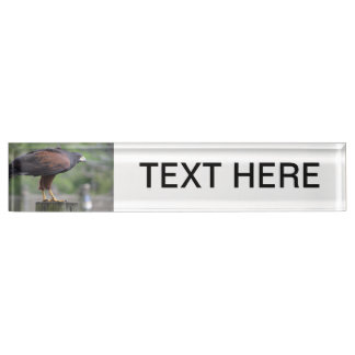 falcon on post raptor bird image name plate
