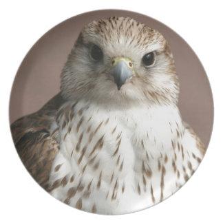 Falcon Plates