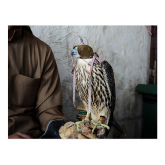 Falconry falcon postcard