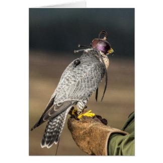 Falconry Greetings Card