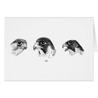 Falconry Studies Father's Day Card