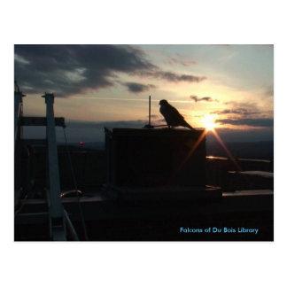 Falcons of Du Bois Library postcard