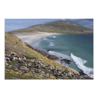 Falkland Islands, West Falkland, Saunders Photograph