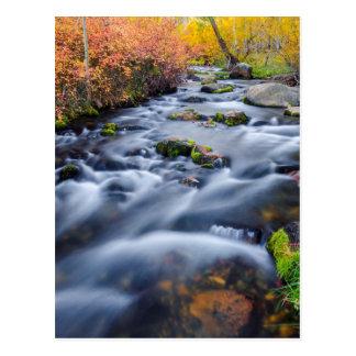 Fall along Lundy Creek, California Postcard