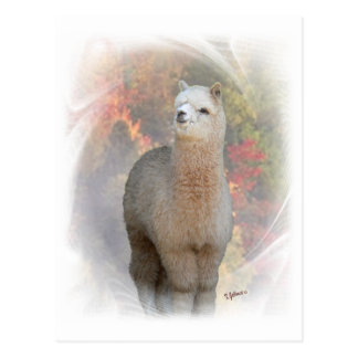 Fall Alpaca Postcard