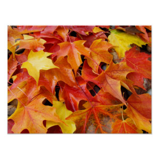 Fall Art prints Colorful bright Autumn Leaves Posters