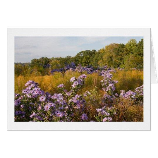 Fall Asters at US National Arboretum Card