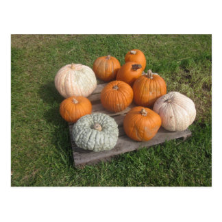 Fall Autumn Pumpkin Patch Postcard
