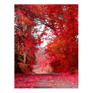 Fall Autumn Season Forest Park Shower Leaf Leaves Postcard