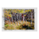 Fall Birch Forest Print