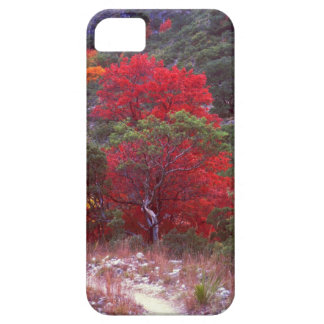 Fall Case For The iPhone 5