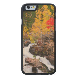 Fall color along Bishop Creek, CA Carved Maple iPhone 6 Case