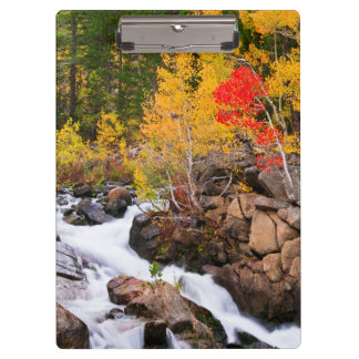 Fall color along Bishop Creek, CA Clipboard