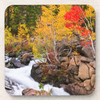 Fall color along Bishop Creek, CA Drink Coaster