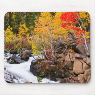 Fall color along Bishop Creek, CA Mouse Pad
