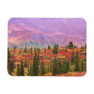 Fall color in Denali National Park Magnet