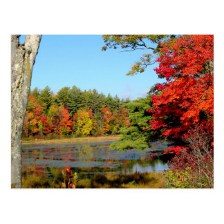 Fall Color In New England Postcard