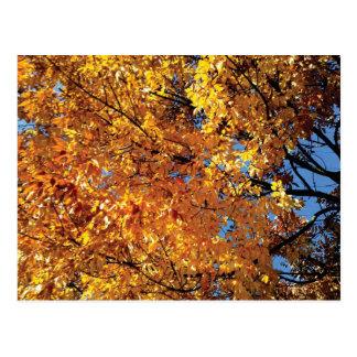 Fall Color Racine Postcard