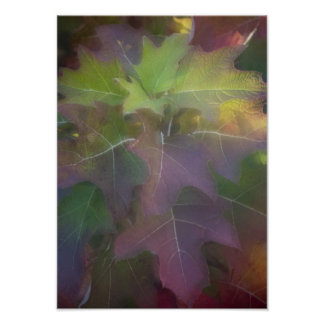 Fall Colored Oak Leaf Hydrangea Poster