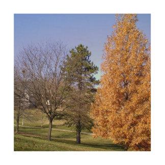 """Fall Colors 12""""x12"""" Wood Wall Art"""