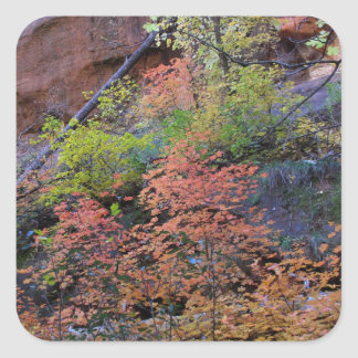 Fall colors all around square sticker