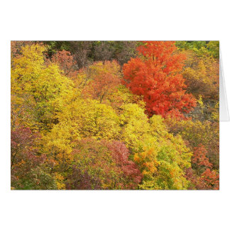 Fall colors card