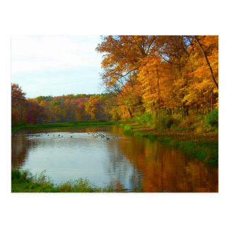 Fall Colors - Geese On The Lake - Nature Scenery Postcard